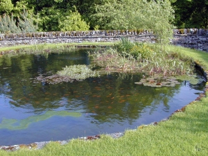 pond-outside-our-cottage